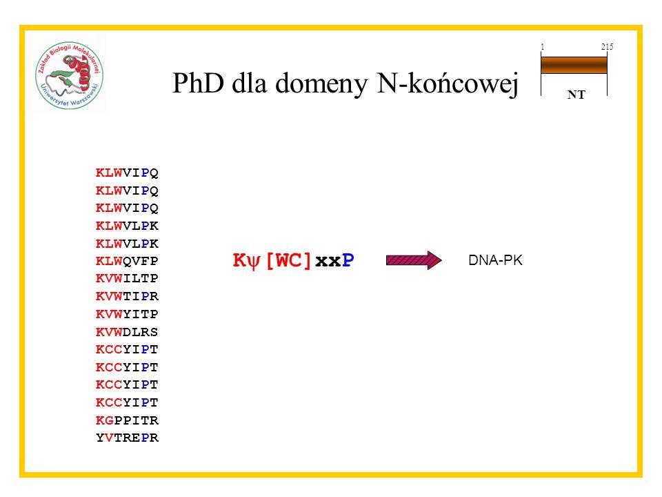 PhD dla domeny N-końcowej
