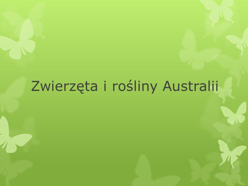 Zwierzęta i rośliny Australii