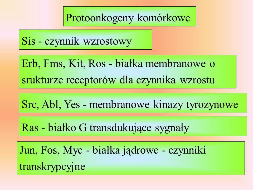 Protoonkogeny komórkowe