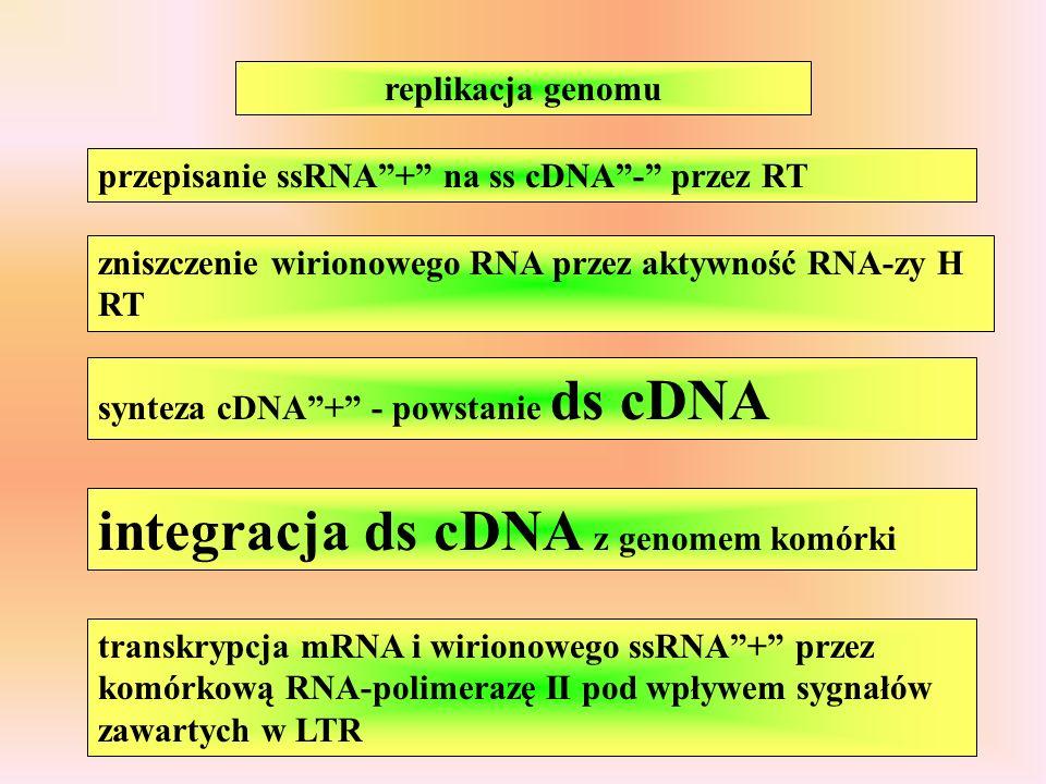 integracja ds cDNA z genomem komórki