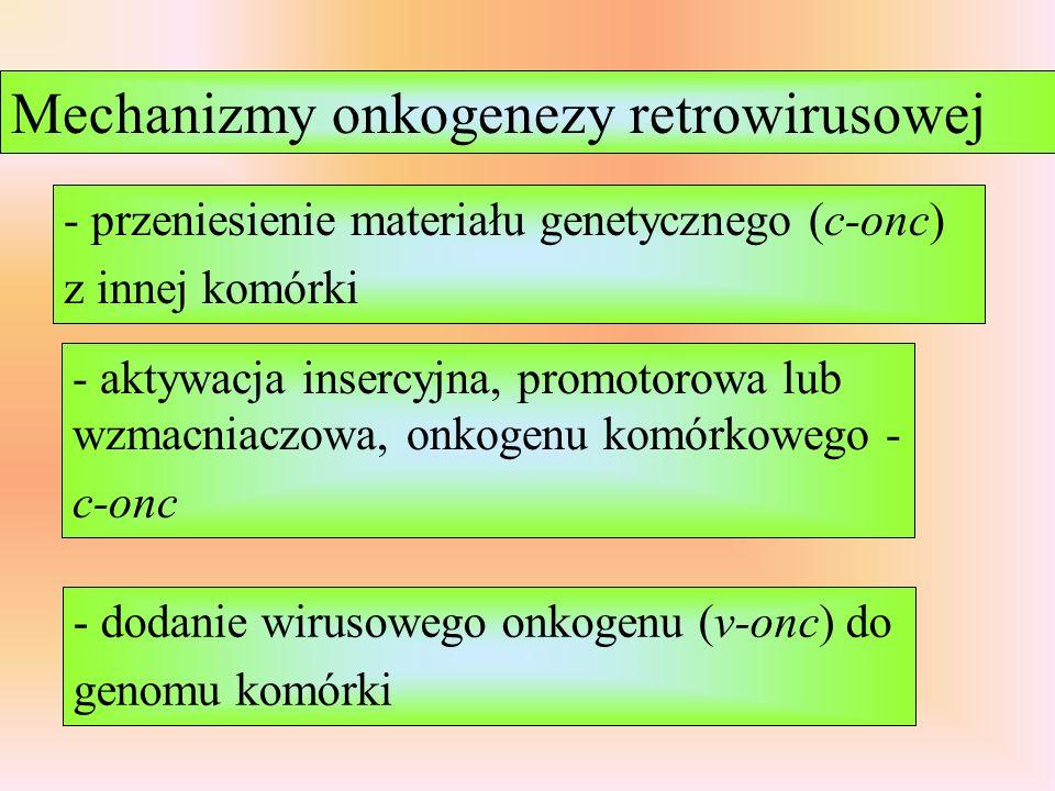 Mechanizmy onkogenezy retrowirusowej
