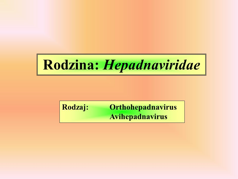 Rodzina: Hepadnaviridae