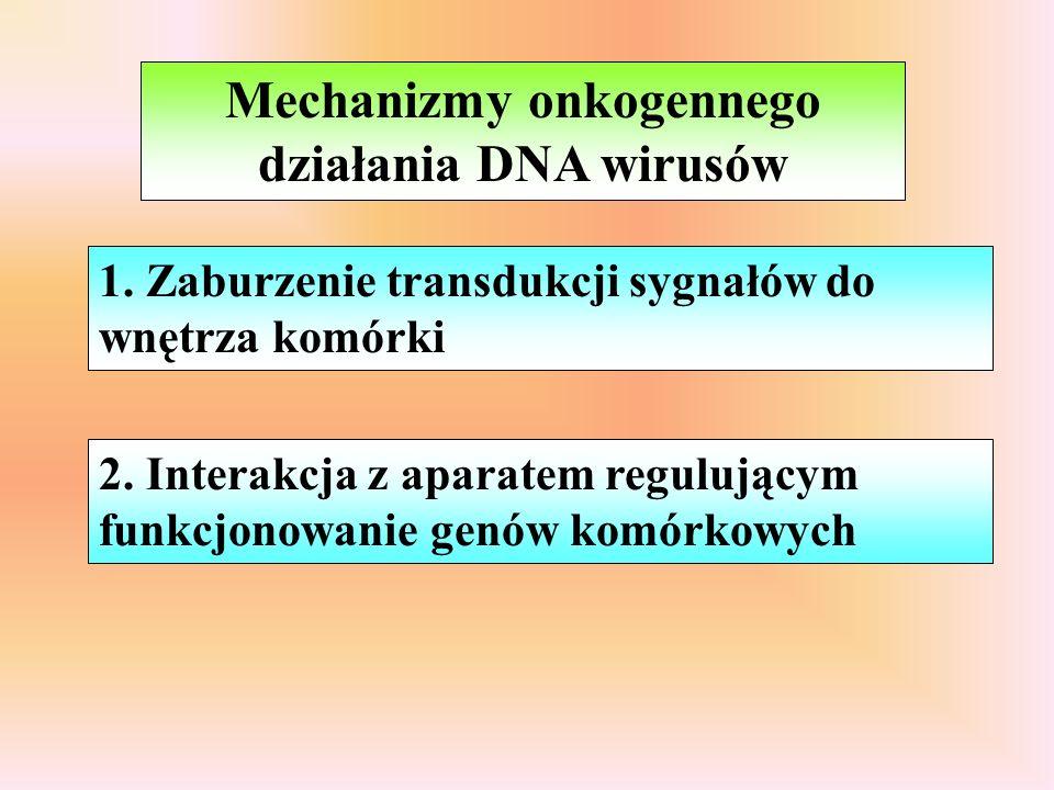 Mechanizmy onkogennego działania DNA wirusów