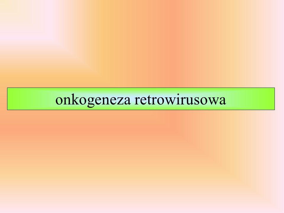 onkogeneza retrowirusowa