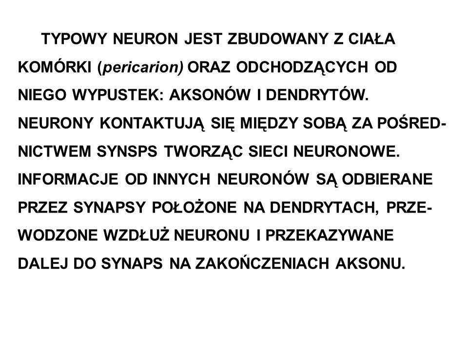 TYPOWY NEURON JEST ZBUDOWANY Z CIAŁA KOMÓRKI (pericarion) ORAZ ODCHODZĄCYCH OD NIEGO WYPUSTEK: AKSONÓW I DENDRYTÓW.