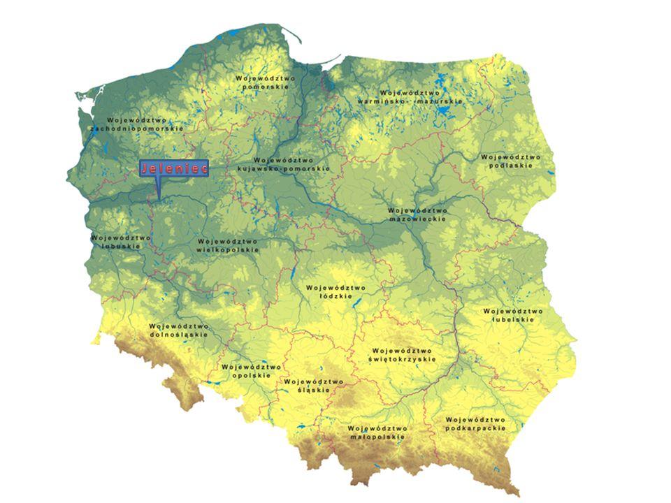 Jeleniec