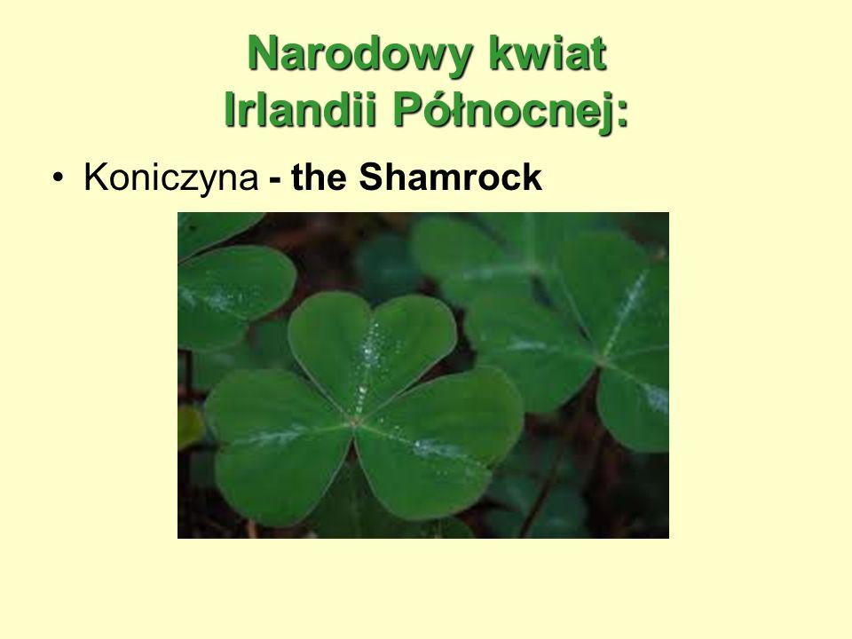 Narodowy kwiat Irlandii Północnej: