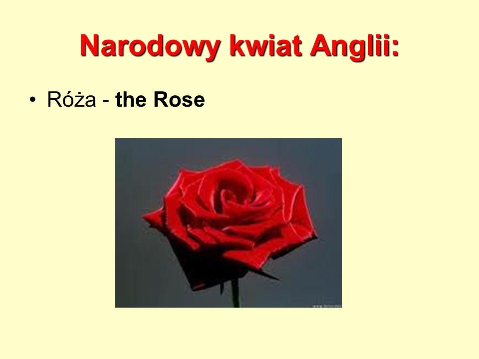 Narodowy kwiat Anglii: