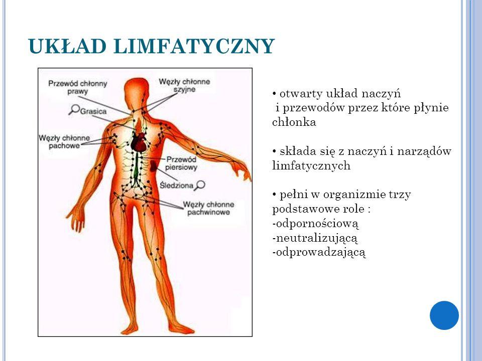 UKŁAD LIMFATYCZNY otwarty układ naczyń i przewodów przez które płynie chłonka. składa się z naczyń i narządów limfatycznych.