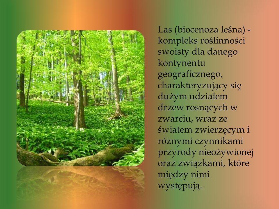 Las (biocenoza leśna) - kompleks roślinności swoisty dla danego kontynentu geograficznego, charakteryzujący się dużym udziałem drzew rosnących w zwarciu, wraz ze światem zwierzęcym i różnymi czynnikami przyrody nieożywionej oraz związkami, które między nimi występują..