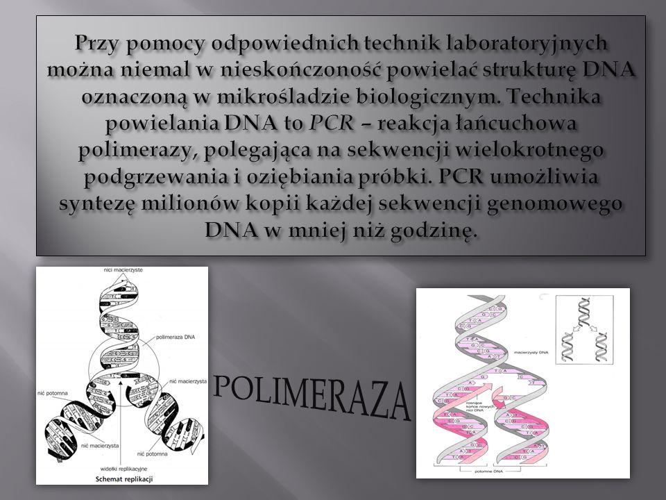 Przy pomocy odpowiednich technik laboratoryjnych można niemal w nieskończoność powielać strukturę DNA oznaczoną w mikrośladzie biologicznym. Technika powielania DNA to PCR – reakcja łańcuchowa polimerazy, polegająca na sekwencji wielokrotnego podgrzewania i oziębiania próbki. PCR umożliwia syntezę milionów kopii każdej sekwencji genomowego DNA w mniej niż godzinę.