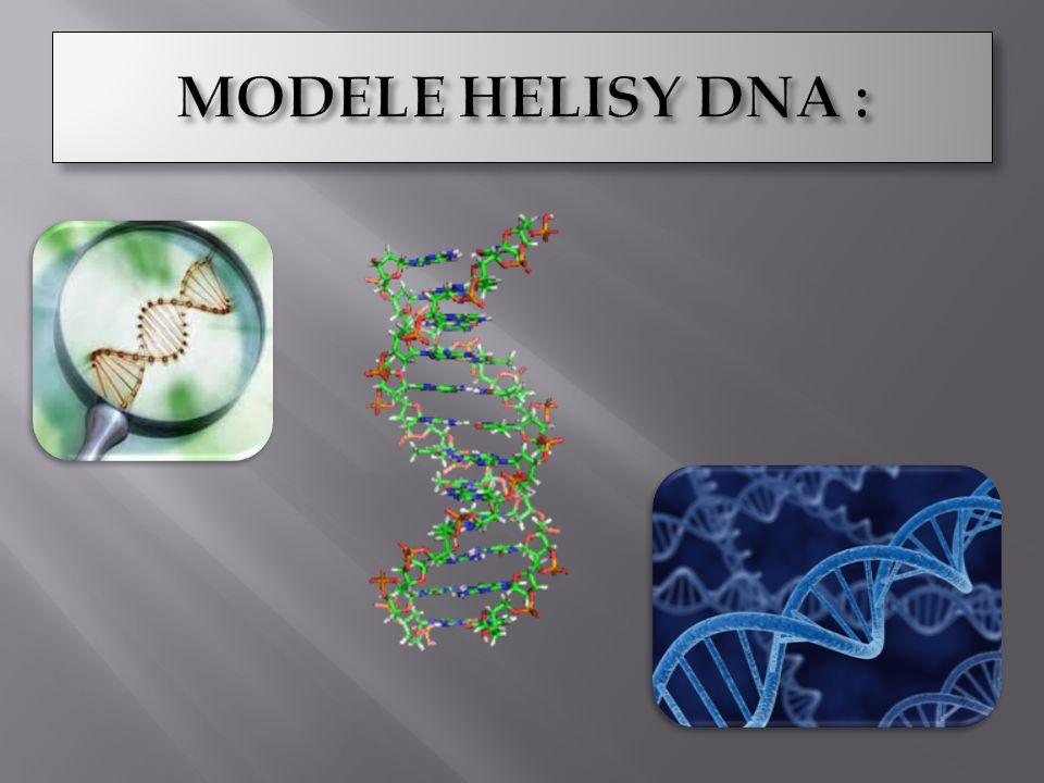 MODELE HELISY DNA :