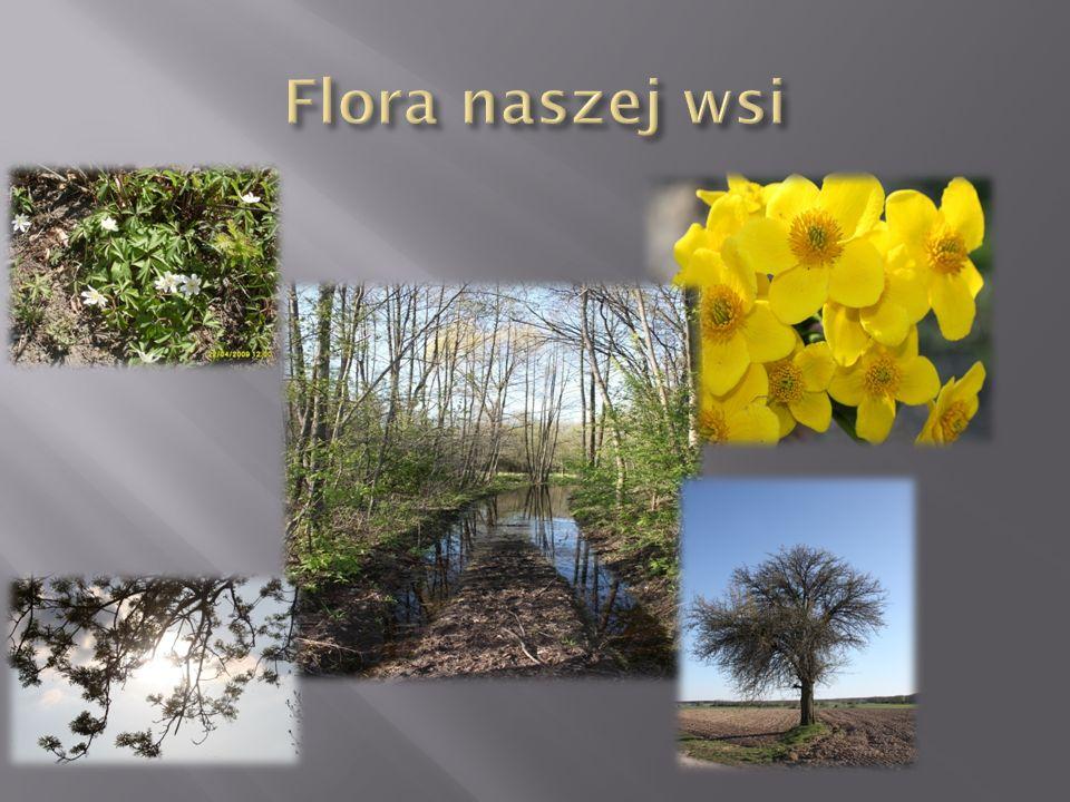 Flora naszej wsi
