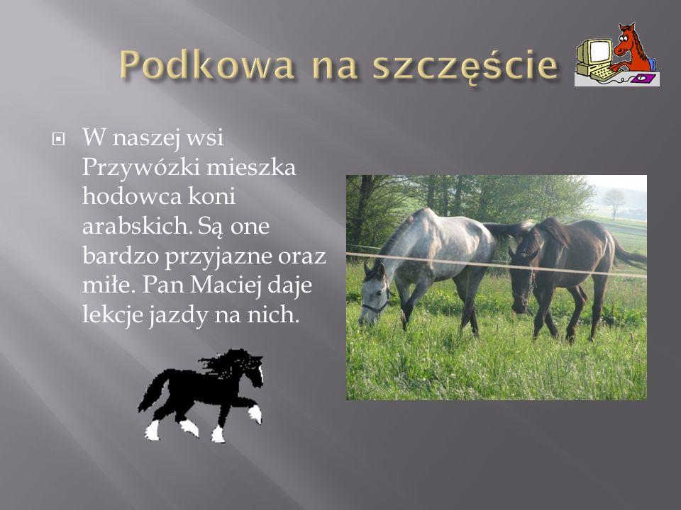 Podkowa na szczęście W naszej wsi Przywózki mieszka hodowca koni arabskich.
