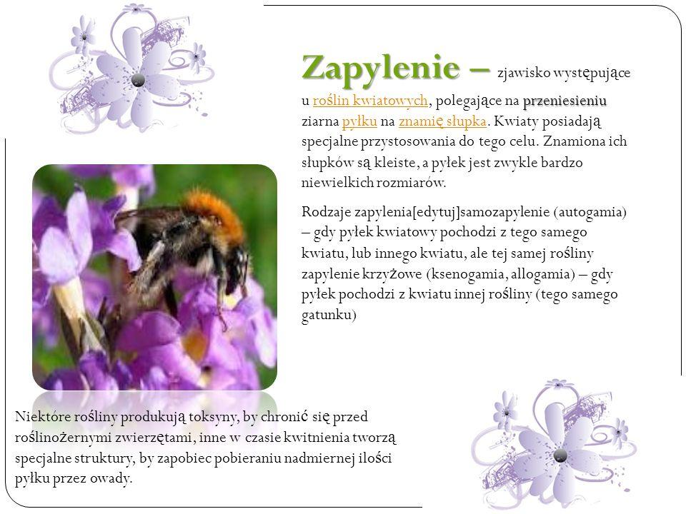 Zapylenie – zjawisko występujące u roślin kwiatowych, polegające na przeniesieniu ziarna pyłku na znamię słupka. Kwiaty posiadają specjalne przystosowania do tego celu. Znamiona ich słupków są kleiste, a pyłek jest zwykle bardzo niewielkich rozmiarów.