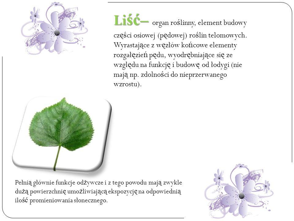 Liść– organ roślinny, element budowy części osiowej (pędowej) roślin telomowych. Wyrastające z węzłów końcowe elementy rozgałęzień pędu, wyodrębniające się ze względu na funkcję i budowę od łodygi (nie mają np. zdolności do nieprzerwanego wzrostu).