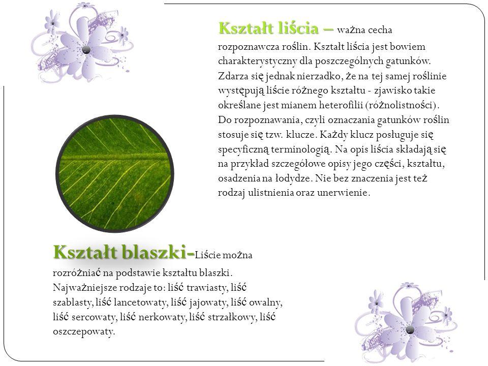 Kształt liścia – ważna cecha rozpoznawcza roślin