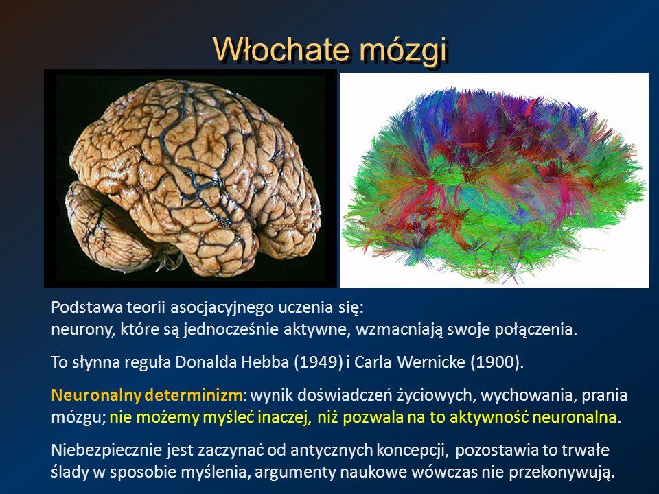 Włochate mózgi Podstawa teorii asocjacyjnego uczenia się: neurony, które są jednocześnie aktywne, wzmacniają swoje połączenia.