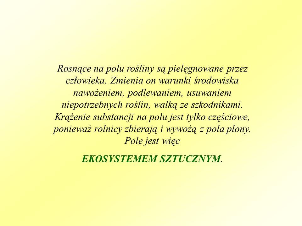 EKOSYSTEMEM SZTUCZNYM.