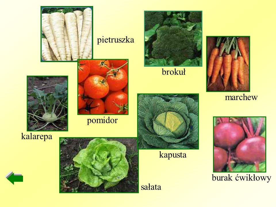 pietruszka brokuł marchew pomidor kalarepa kapusta burak ćwikłowy sałata