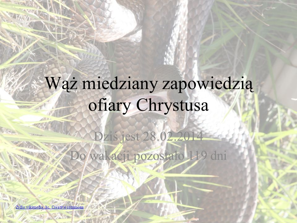 Wąż miedziany zapowiedzią ofiary Chrystusa