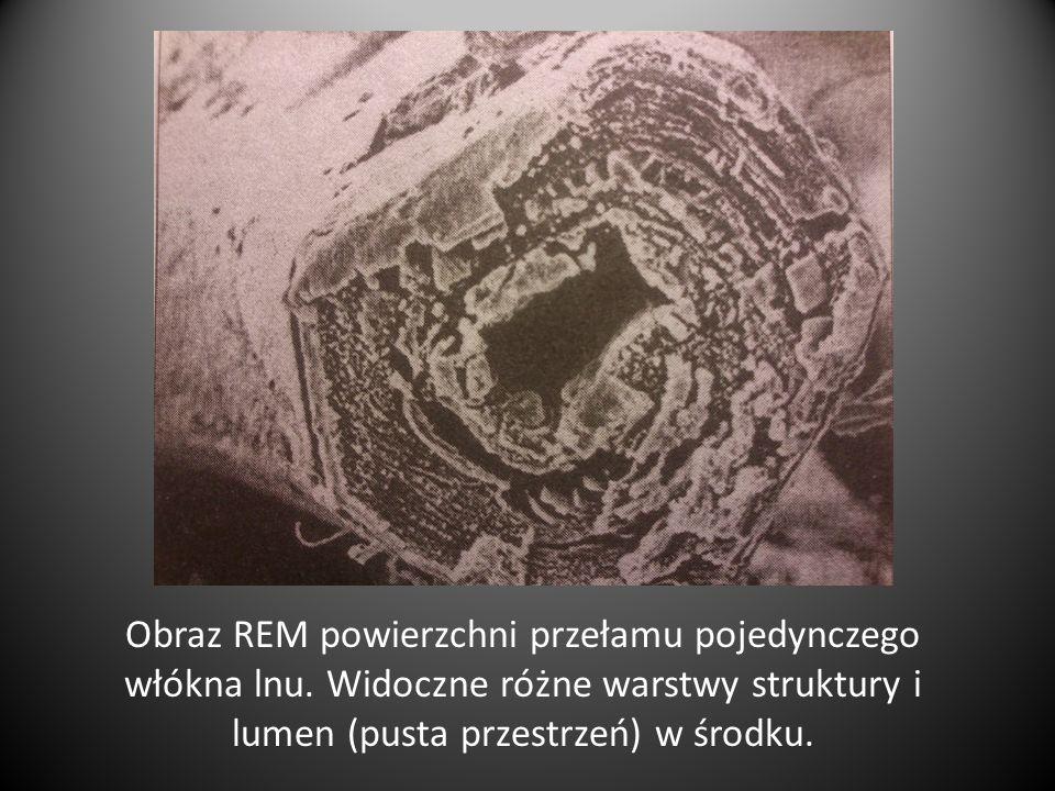 Obraz REM powierzchni przełamu pojedynczego włókna lnu