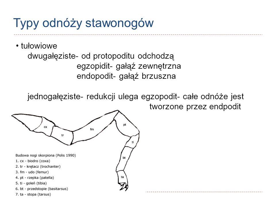 Typy odnóży stawonogów