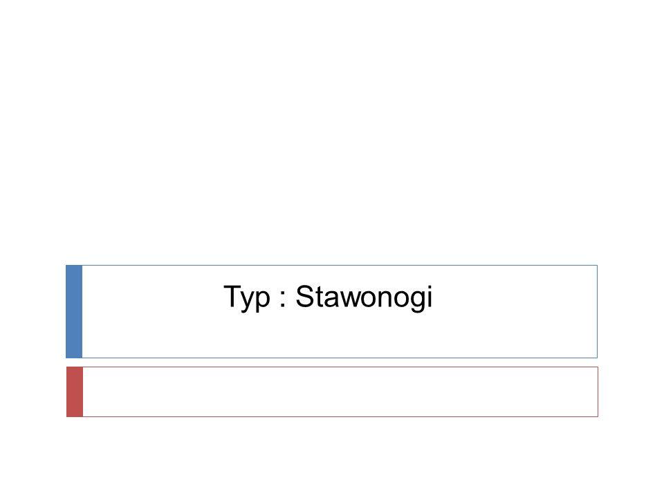 Typ : Stawonogi