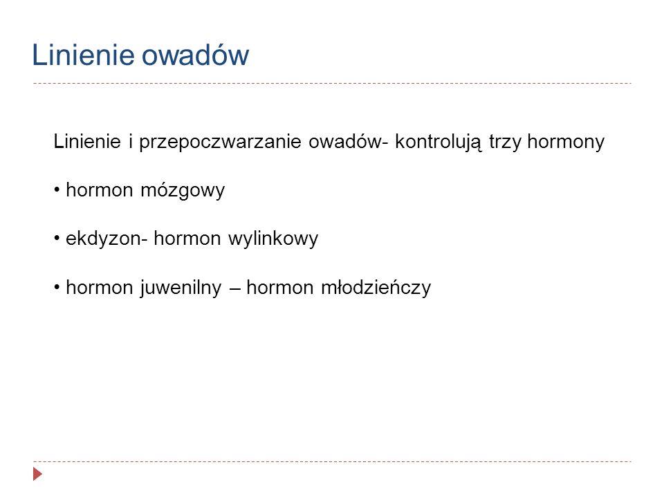 Linienie owadów Linienie i przepoczwarzanie owadów- kontrolują trzy hormony. hormon mózgowy. ekdyzon- hormon wylinkowy.