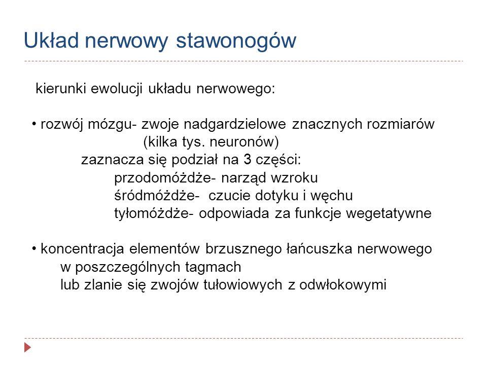 Układ nerwowy stawonogów