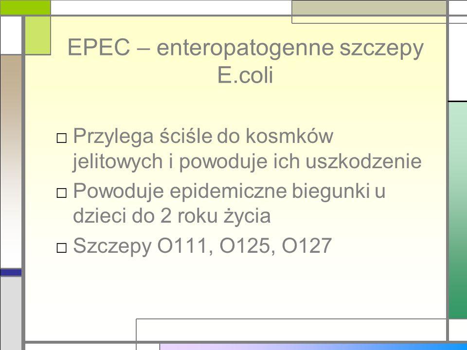 EPEC – enteropatogenne szczepy E.coli