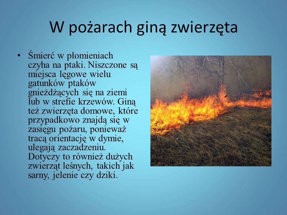 W pożarach giną zwierzęta