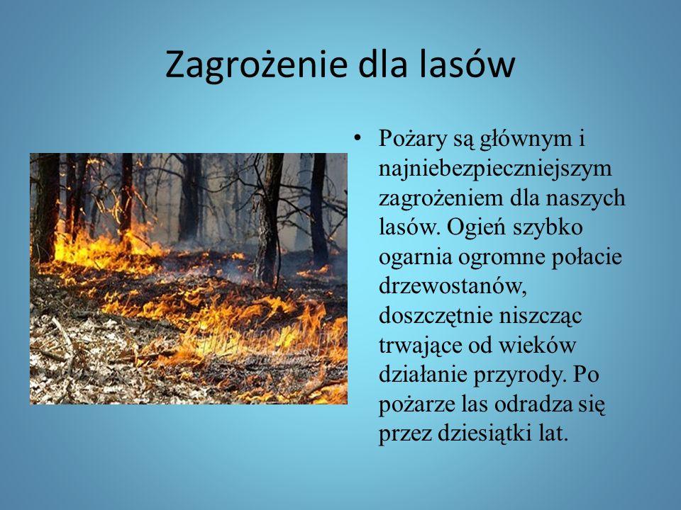 Zagrożenie dla lasów