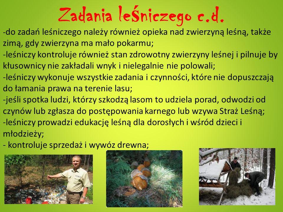 Zadania leśniczego c.d. zimą, gdy zwierzyna ma mało pokarmu;