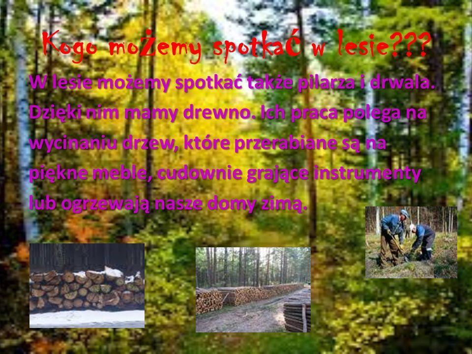 Kogo możemy spotkać w lesie