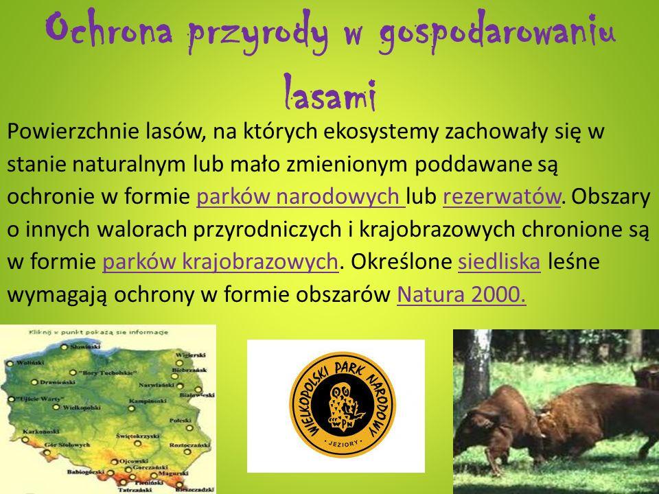 Ochrona przyrody w gospodarowaniu lasami