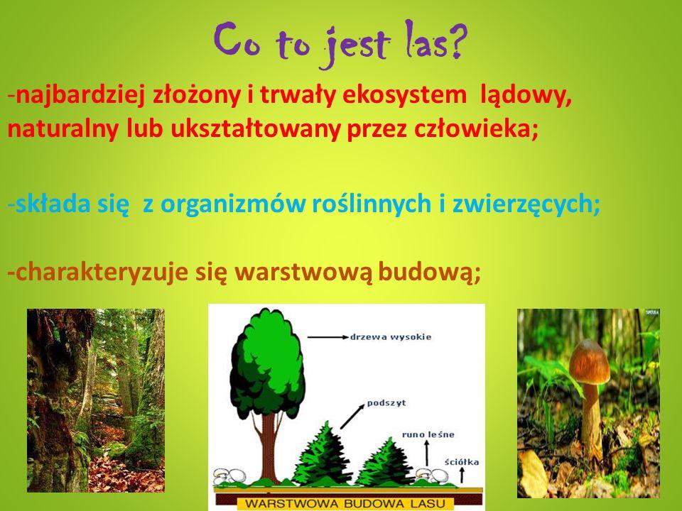 Co to jest las najbardziej złożony i trwały ekosystem lądowy, naturalny lub ukształtowany przez człowieka;
