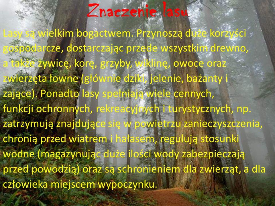 Znaczenie lasu