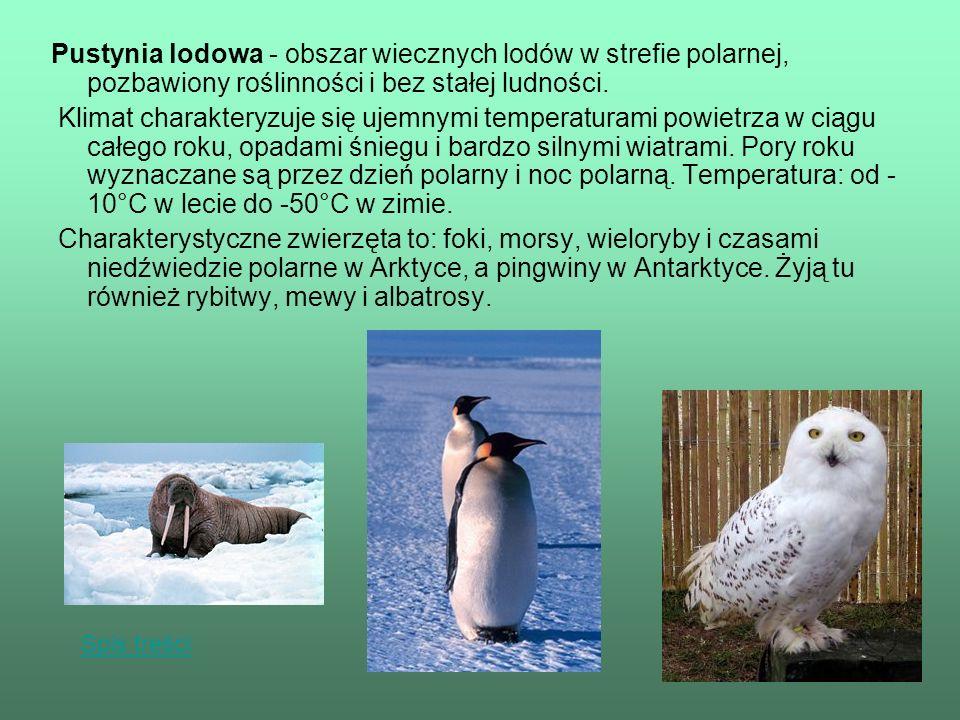 Pustynia lodowa - obszar wiecznych lodów w strefie polarnej, pozbawiony roślinności i bez stałej ludności.