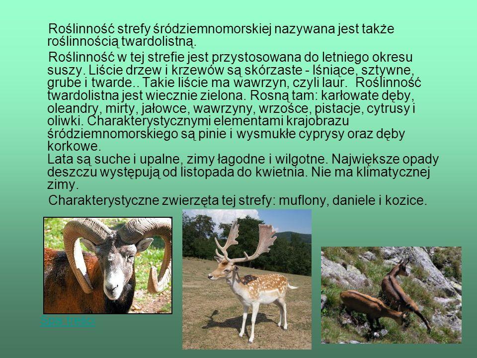 Charakterystyczne zwierzęta tej strefy: muflony, daniele i kozice.