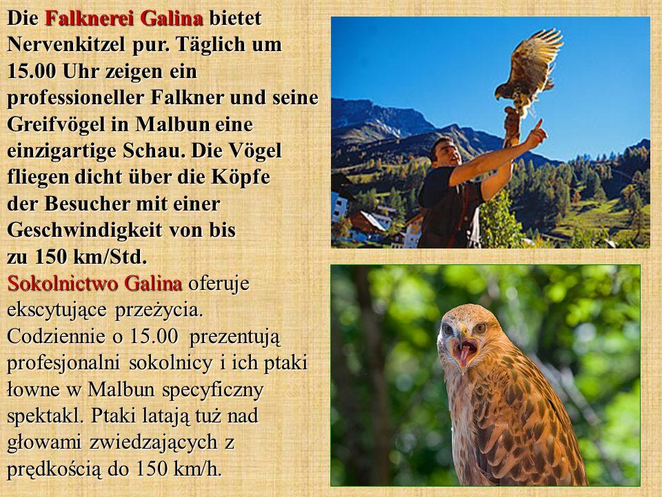 Die Falknerei Galina bietet Nervenkitzel pur. Täglich um 15