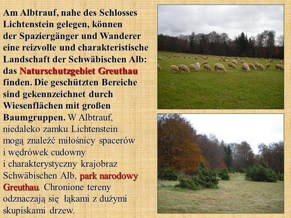 Am Albtrauf, nahe des Schlosses Lichtenstein gelegen, können der Spaziergänger und Wanderer eine reizvolle und charakteristische Landschaft der Schwäbischen Alb: das Naturschutzgebiet Greuthau finden.