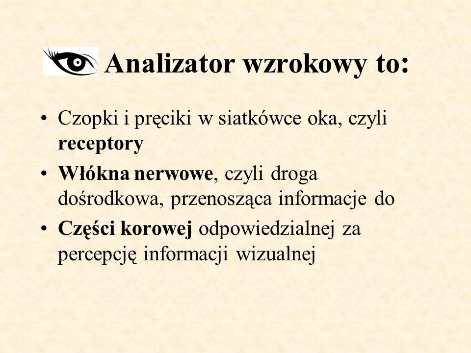 Analizator wzrokowy to: