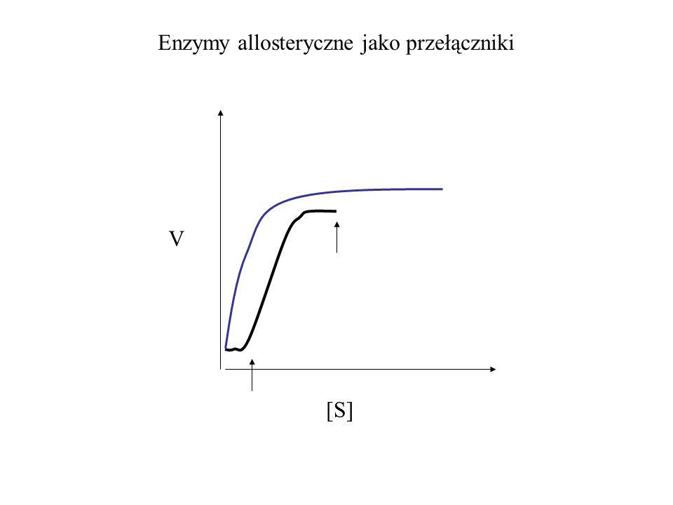Enzymy allosteryczne jako przełączniki