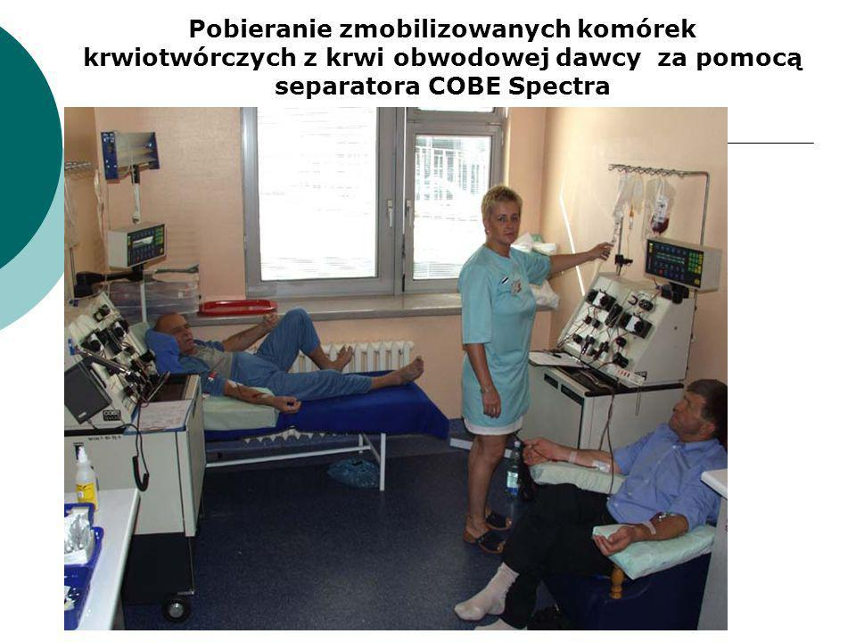Pobieranie zmobilizowanych komórek krwiotwórczych z krwi obwodowej dawcy za pomocą separatora COBE Spectra