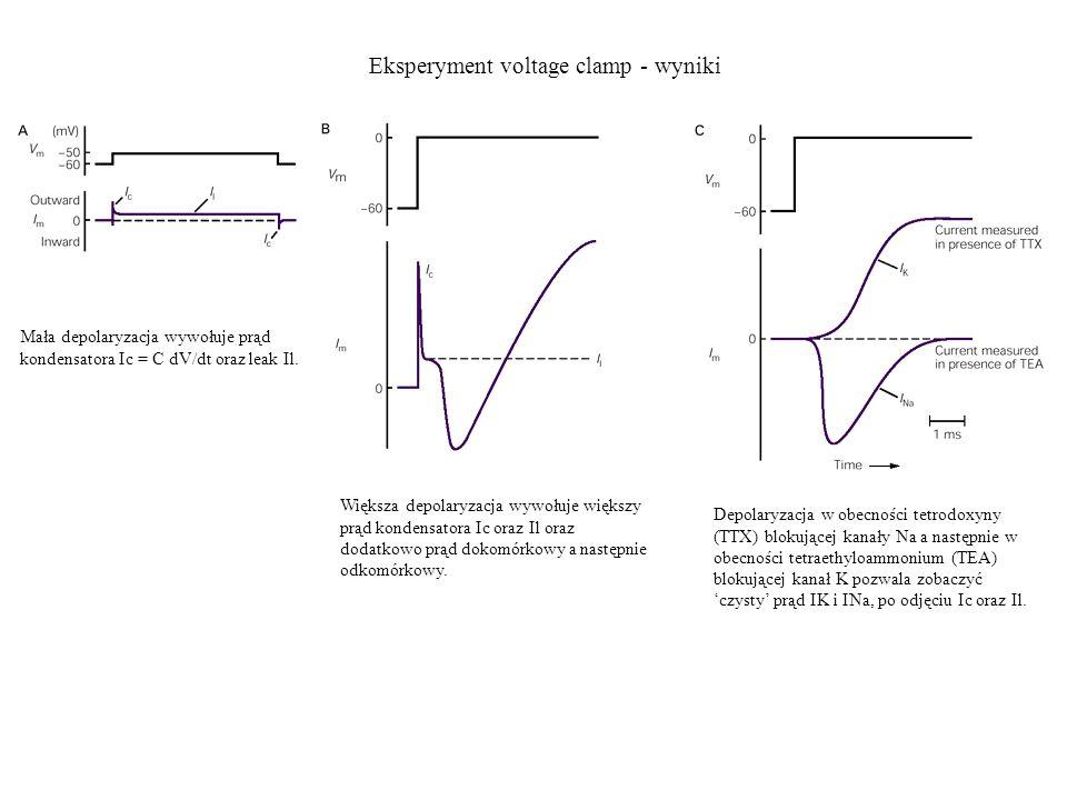 Eksperyment voltage clamp - wyniki
