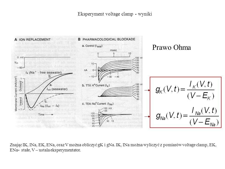 Prawo Ohma Eksperyment voltage clamp - wyniki