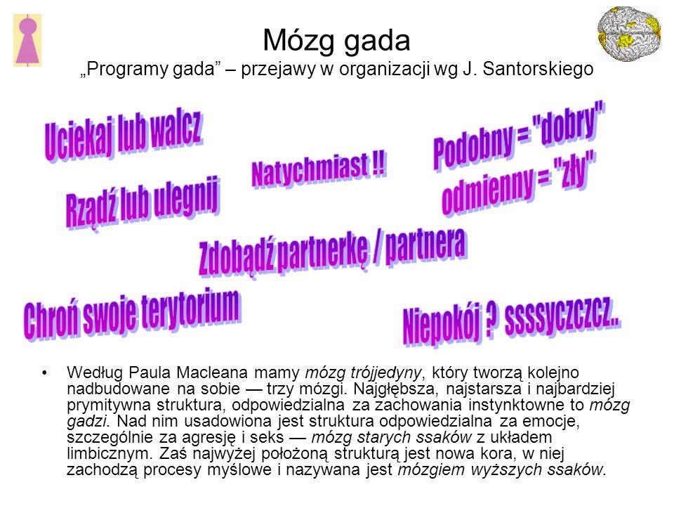 """Mózg gada """"Programy gada – przejawy w organizacji wg J. Santorskiego"""