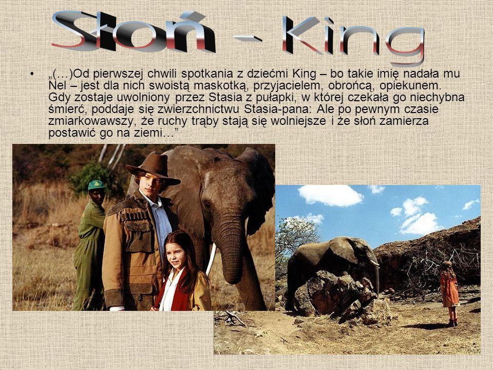 Słoń - King