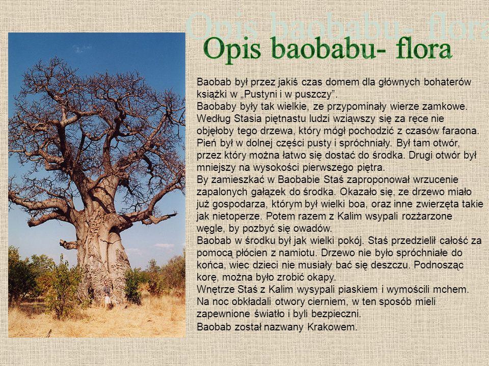 Opis baobabu- flora